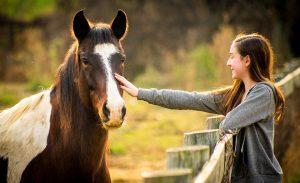 Calul, un partener în relaționare și socializare (II)
